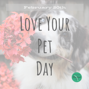 Love Your Pet Day - February 20th - Mommy Standard Time