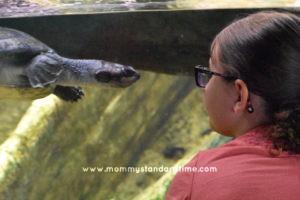 mini-me and turtle at zoo