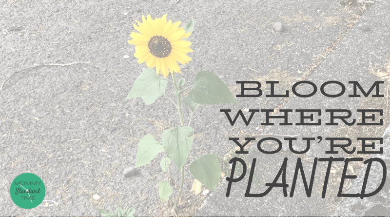 Bloom where you're planted. Mommy Standard Time Blog