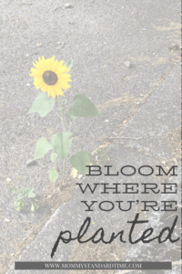 Bloom where you are planted - Mommy Standard Time Blog